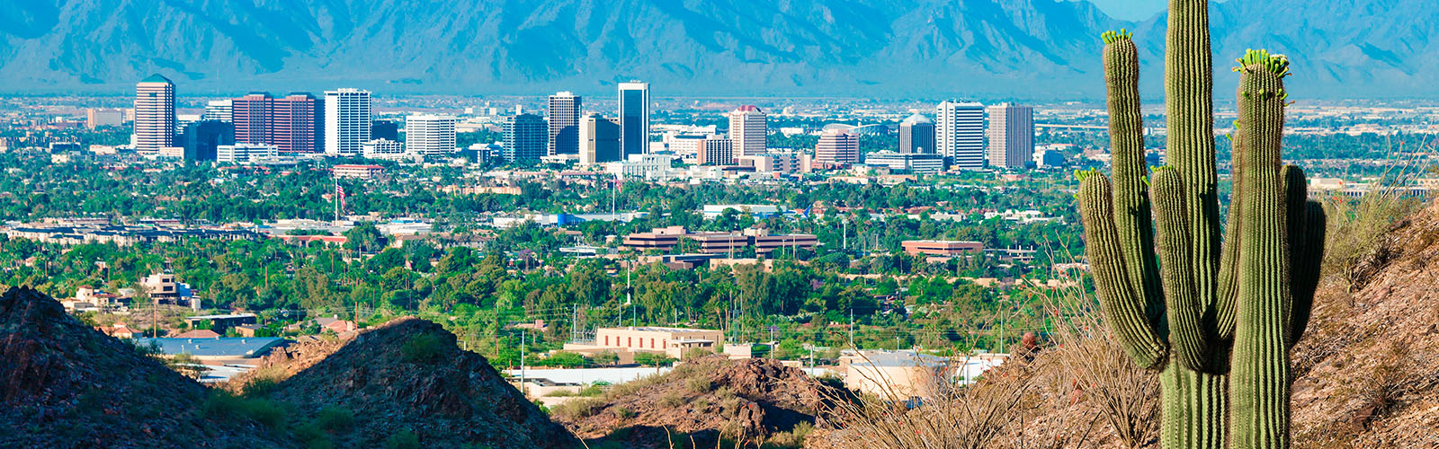 cactus and the city of Phoenix
